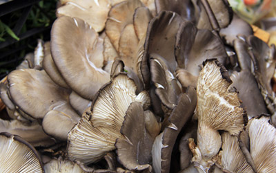 Picture of Oyster mushrooms